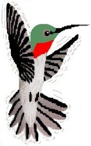 hummingbird new